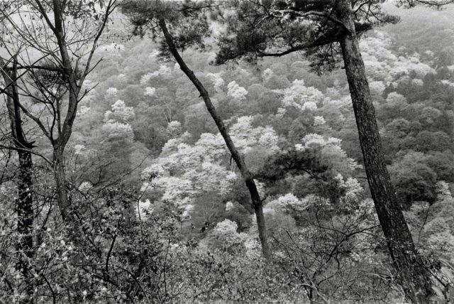 12. Kyoto, 1984