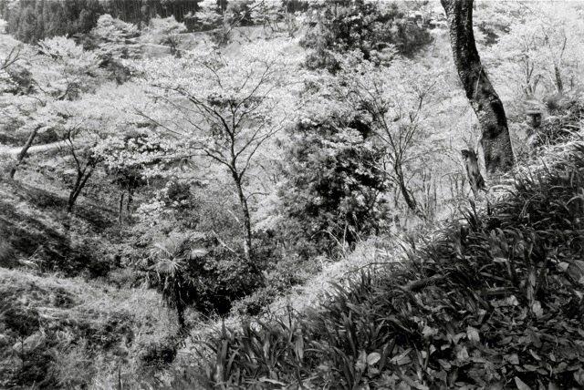 16. Yoshino, 1984