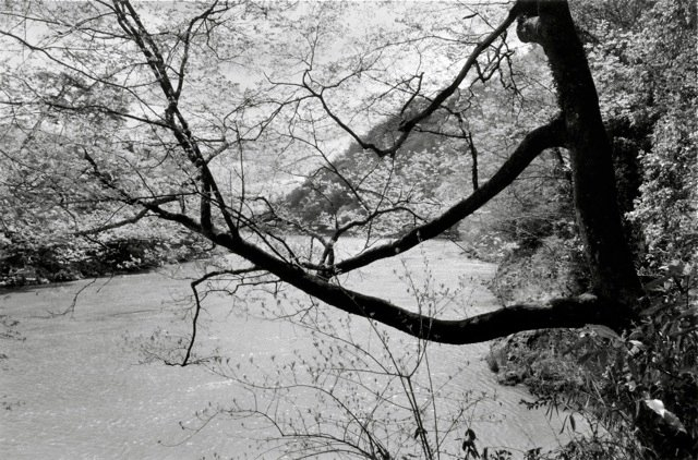 2. Kyoto, 1984