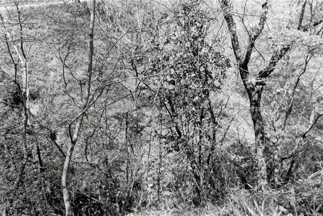 21 . Yoshino, 1984