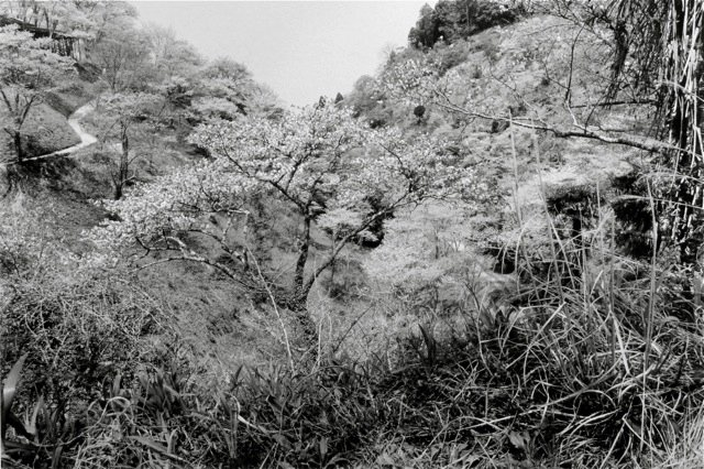 22. Yoshino, 1984