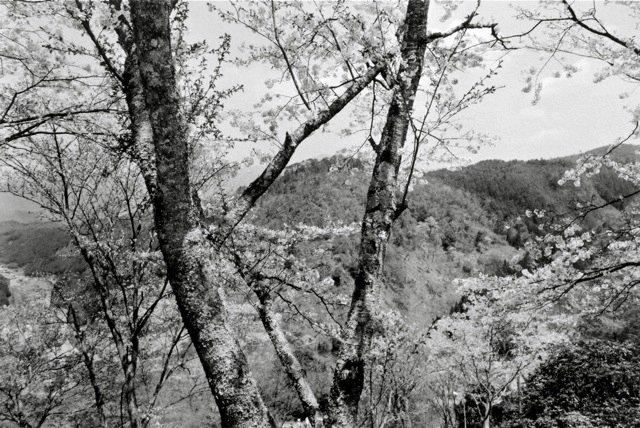 23. Yoshino, 1984