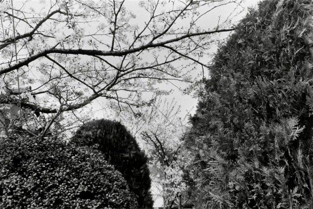 26. Hiroshima, 1984