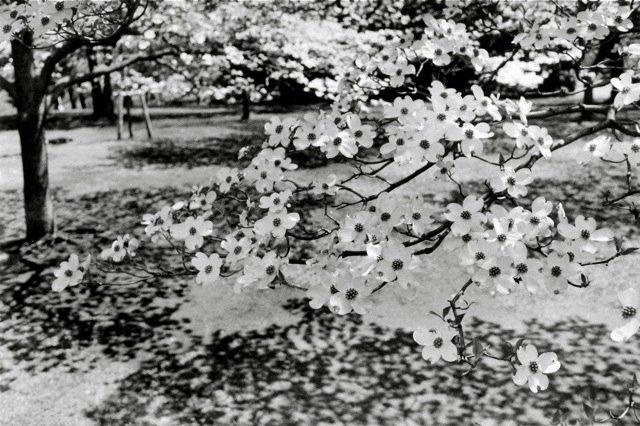 29. Tokyo, 1981