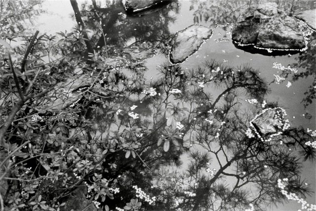 4 . Kyoto, 1981