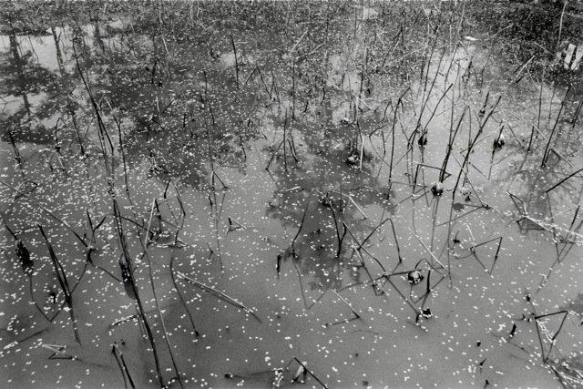 5. Kyoto, 1984